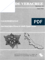 Flora de Veracruz Calochartaceae