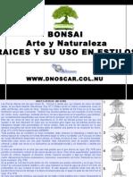 Desarrollo de Raices Bonsai-dnoscar