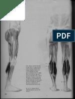 4 Musculos de La Pierna