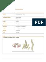 medula osea.pdf