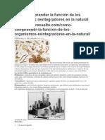 Como Comprender La Función de Los Organismos Reintegradores en La Natural