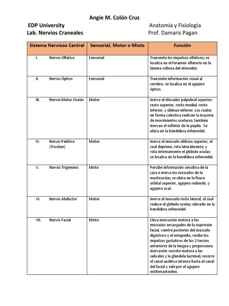 Dorable Agujeros De Anatomía Y Fisiología Pruebas De La Práctica ...