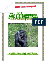 *Endangered* African Chimpanzee, by Donnette E Davis, St Aiden's Homeschool, South Africa