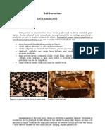 Boli-Albine.pdf