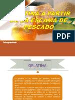 Gelatina-escama de Pescado- (1)