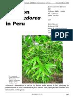 Género Chamaeodora en Perú