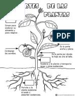 Partes-de-las-plantas-Actividades.pdf