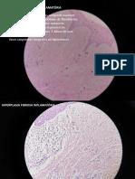 Lâminas histológicas - Estomatologia