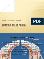 nomenclaturadental
