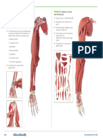 Arm Muscle Models