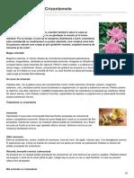 Formula as.ro Leacuri Orientale Crizantemele