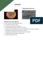gramnegatív baktériumok.pdf