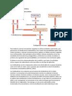 Bioquimica (Rutas Metabolicas Cafeina)