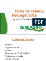 Variedades de Cebolla Pedregal 2016