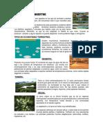Ecosistema Terrestre Y ACUATICO