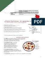 Guia Circulatorio 8 Basico