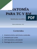 Ventrículos Cerebrales anatomía para TAC y RMN