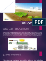 Helio Cult Ivo