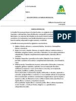 Descripción de La Familia Moraceae en Guatemala