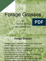 Forage Grasses
