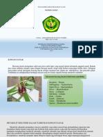 Ahmaddinoor Kusuma (ACC 115 046) Bawang Dayak.pdf