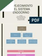 Envejecimiento Del Sistema Endocrino 2. (1)