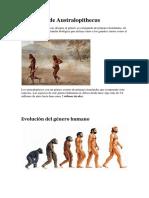 Definición de Australopithecus (1)