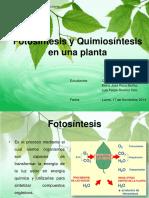 Fotosíntesis y Quimiosíntesis en Una Planta