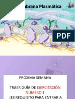5.- Membrana Plasmática y Transporte de Membrana