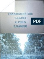 Karet Dan Pinus