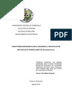 CARACTERIZACIÓN MORFOLÓGICA DE Xanthomonas.pdf