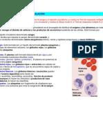 El Aparato Circulatorio y La Circulación