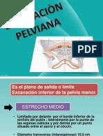 Diapositivas Anatomia II