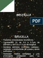 20 BRUCELLA.pdf