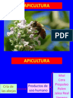 Apicultura 1a Clase