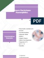 Género Bacteriano haemophilus