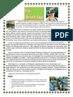 Biografia de Antonio Brakc Egg