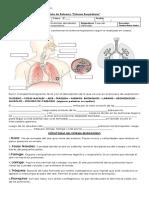 Guia Quintos Sistema Respiratorio