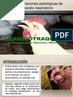 laringotraqueitisaviar.pptx