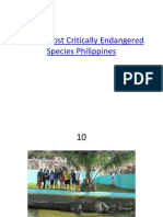 Top 10 Most Critically Endangered Species Philippines
