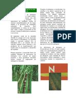 CONOZCA+LA+DEFICIENCIA+DE+NITROGENO