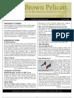 January 2009 Brown Pelican Sarasota Audubon Society