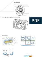 cell diagrams