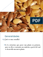 4. Semilla