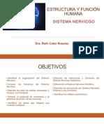 11a Sesión Estructura y Función Sistema Nervioso