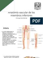 Anatomía Vascular de Los Miembros Inferiores
