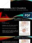 Testículos y ovarios.pptx