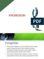 205814129-KROMOSOM