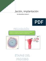 Fecundación, implantación