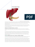 El Hígado(Información)